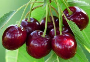 ăn cherry có mập ko, ăn cherry có béo ko, ăn cherry có béo, ăn cherry giảm cân, cherry có tác dụng giảm cân không, ăn cherry có giảm cân không, cherry có béo k, cherry giảm cân, ăn cherry có mập không, cherry bao nhiêu calo